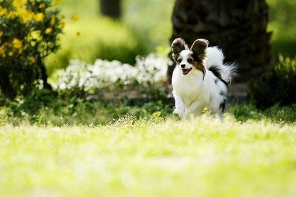 犬 散歩 重要性
